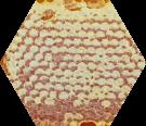 bienenprodukte_honig