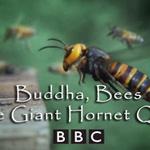 film_buddha_bees