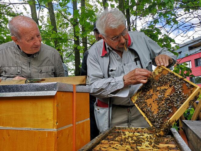 Franz Hodel, ein gestandener und verdienter Sklenarzüchter, bei der Beurteilung von Sanftmut und Wabensitz eines Bienenvolkes.