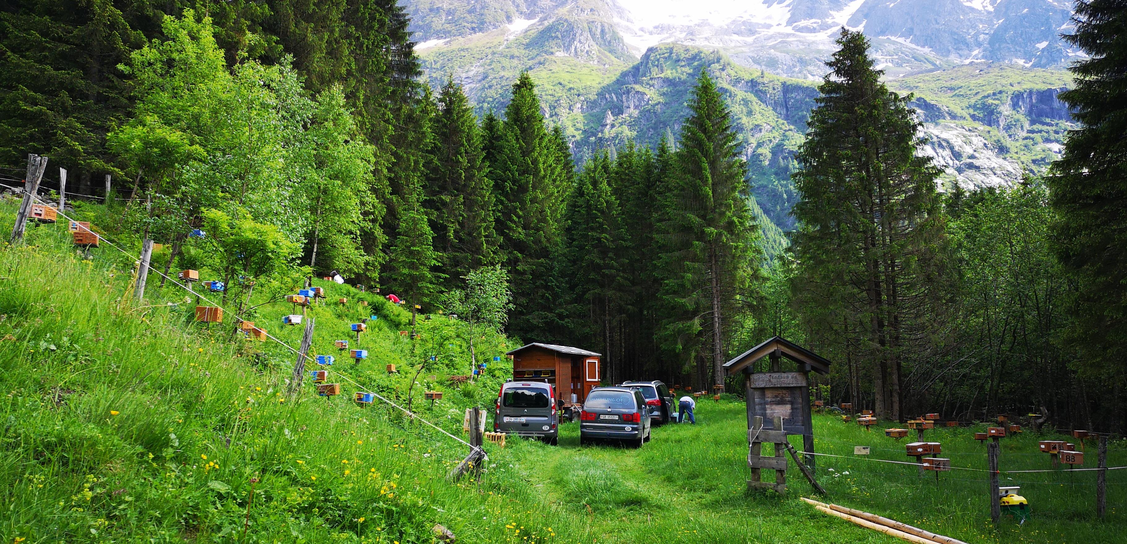 A-Belegstelle Greina: Ein wichtiger Baustein bei der Reinzucht von Carnica-Bienen in der Schweiz.