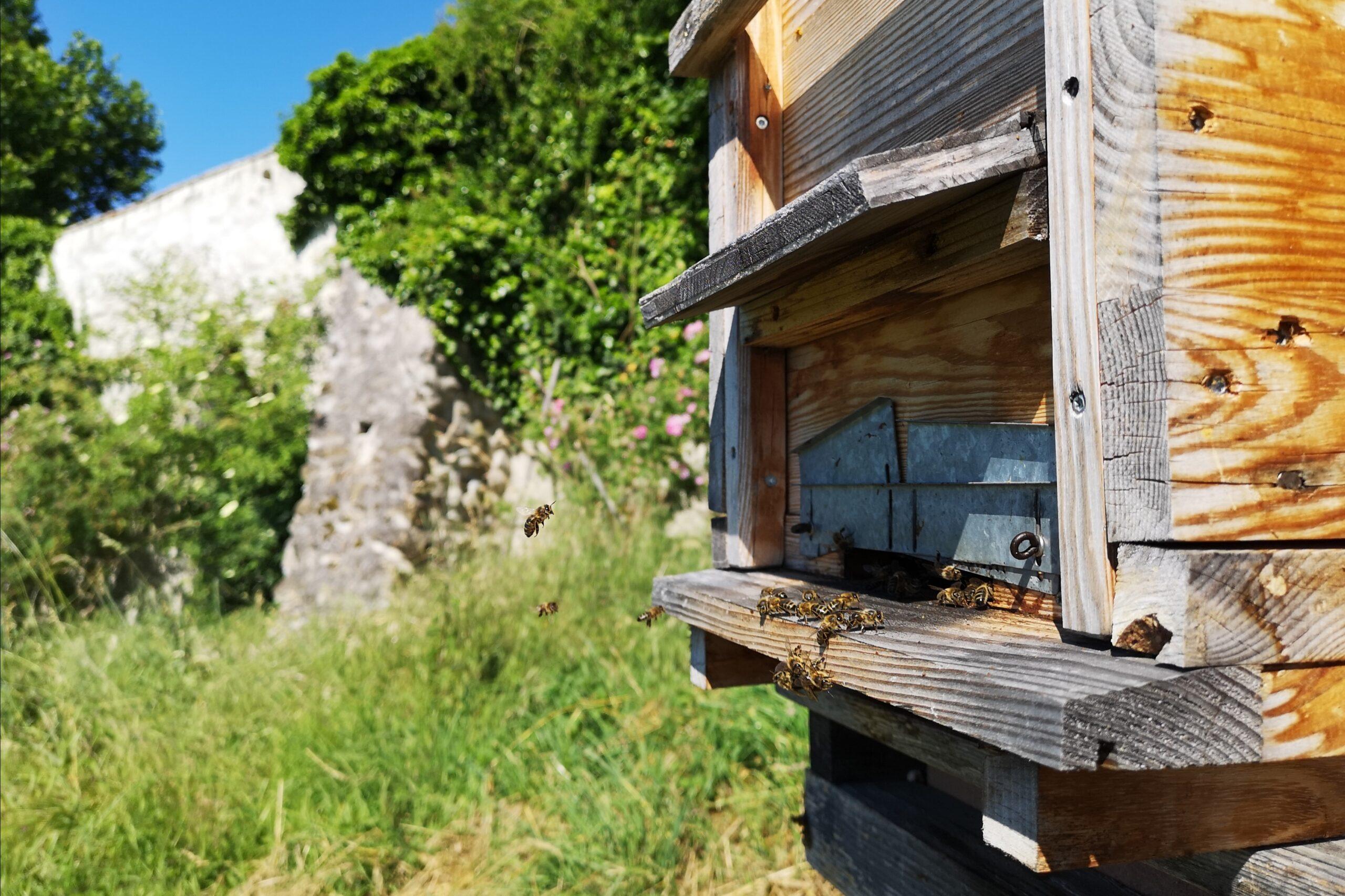 Bienenbeute vor den Klostermauern der Kartause Ittingen