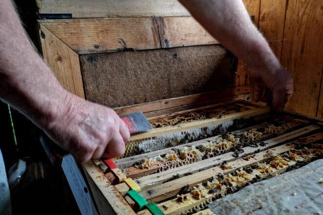 Beim Öffnen einer Bienenbeute