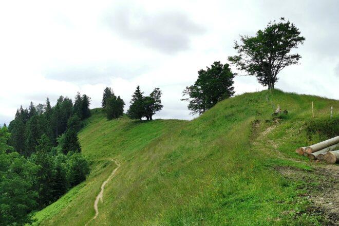 Trimle: Kantonsgrenze zwischen Luzern und Bern.