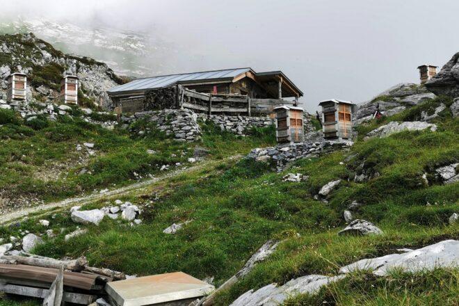 Alphütte im unteren Segnesboden