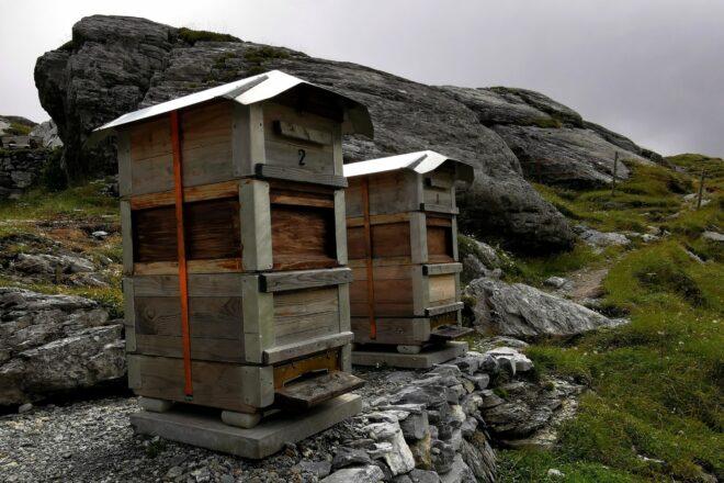 Bienenbeuten in steiniger Alplandschaft